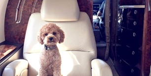 Pet_Dog_Instagram